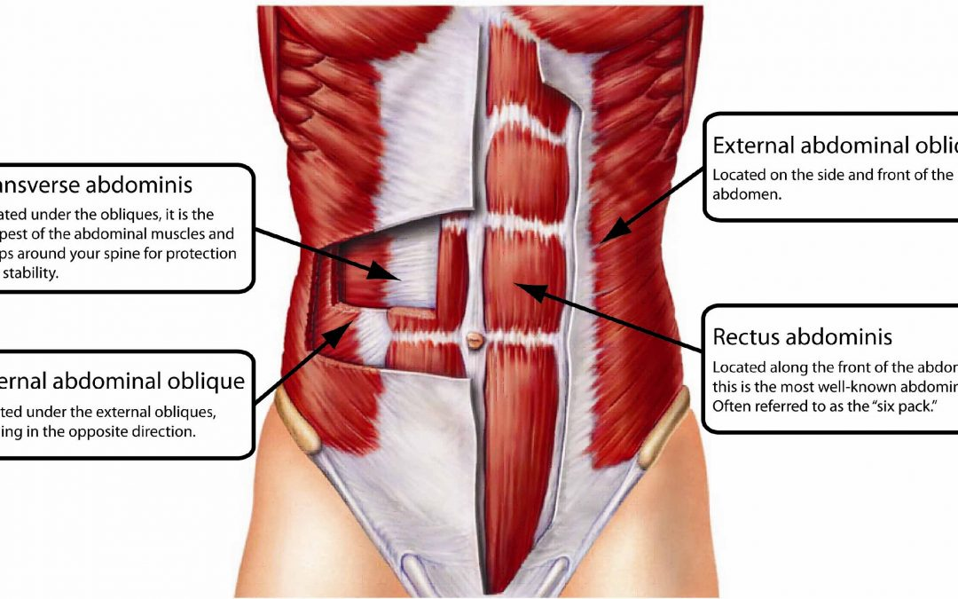 Transverses Abdominis and Your Abdominal Muscles